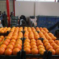 عرضه میوه تنظیم بازار شب عید در سراسر کشور آغاز شد